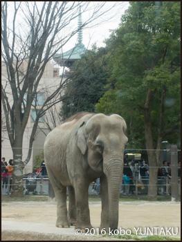 上野動物園のゾウ
