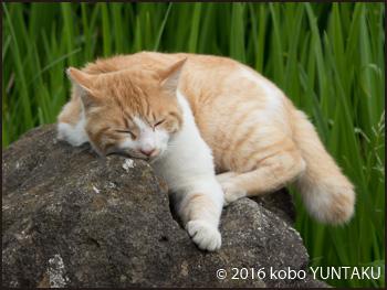 称名寺の猫