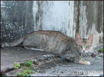 名護市裏通りの猫