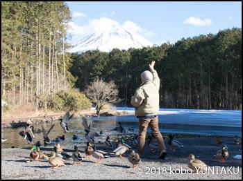 富士山をバックに水鳥と遊ぶ