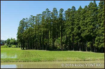 小湊鉄道里山トロッコ列車から見た田んぼ