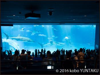 美ら海水族館 大水槽
